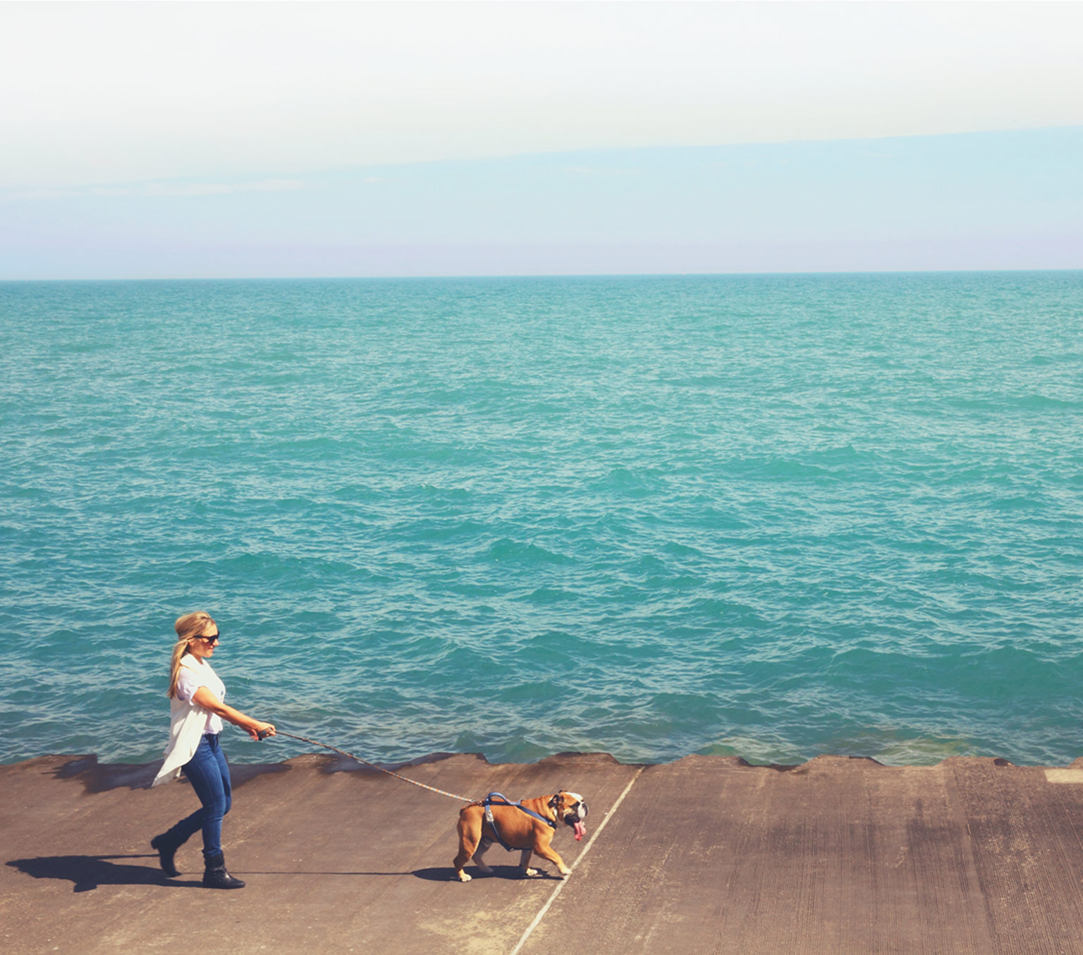 Figo Pet Insurance Plans for Dogs and Cats