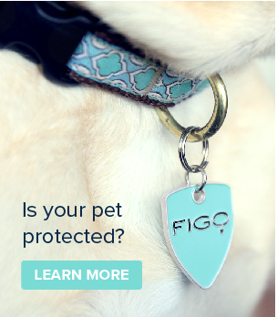 Advertisement for pet insurance.