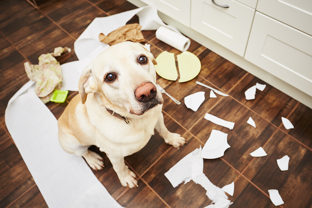 Reduce pet anxiety when you travel | Tips for boarding your pet