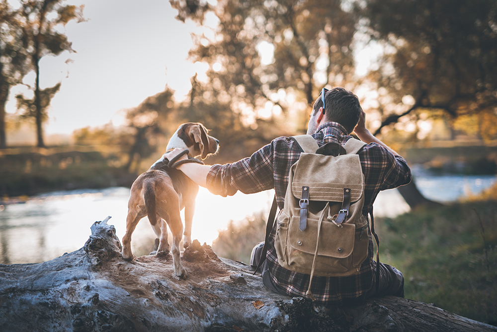 Rest break while traveling with your pet
