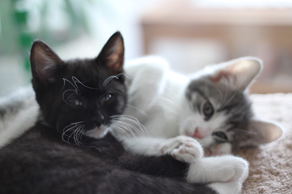 bae05a5145 Chaplin And Velma  Cat Rescue Stories