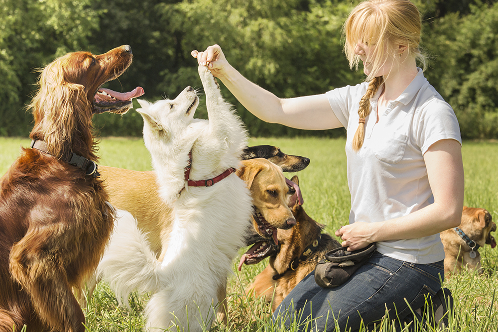 Choosing The Best Dog Trainer | Figo Pet Insurance