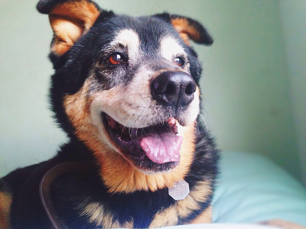 National Mutt Day: The Joys Of Mixed Breed Dogs | Figo Pet ...