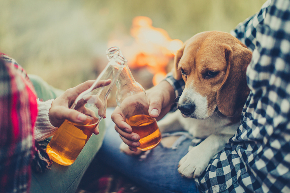 Dogs Is Drink Wine Safe