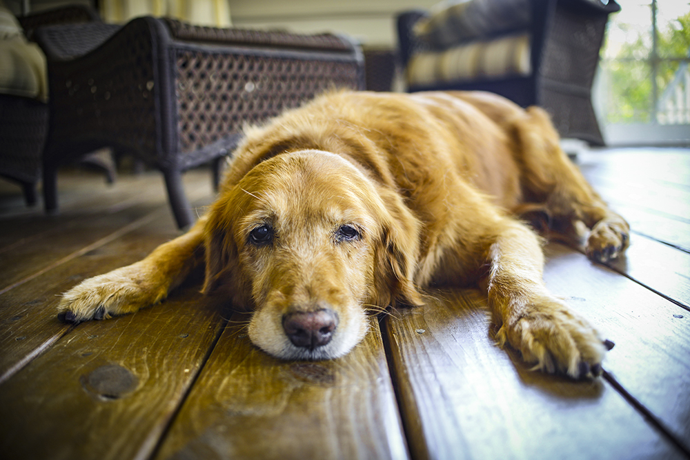8 Tips To Calm Your Dog During A Thunderstorm | Figo Pet Insurance