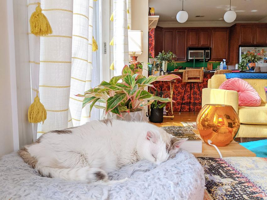 Cat relaxes on bed in colorful kitchen