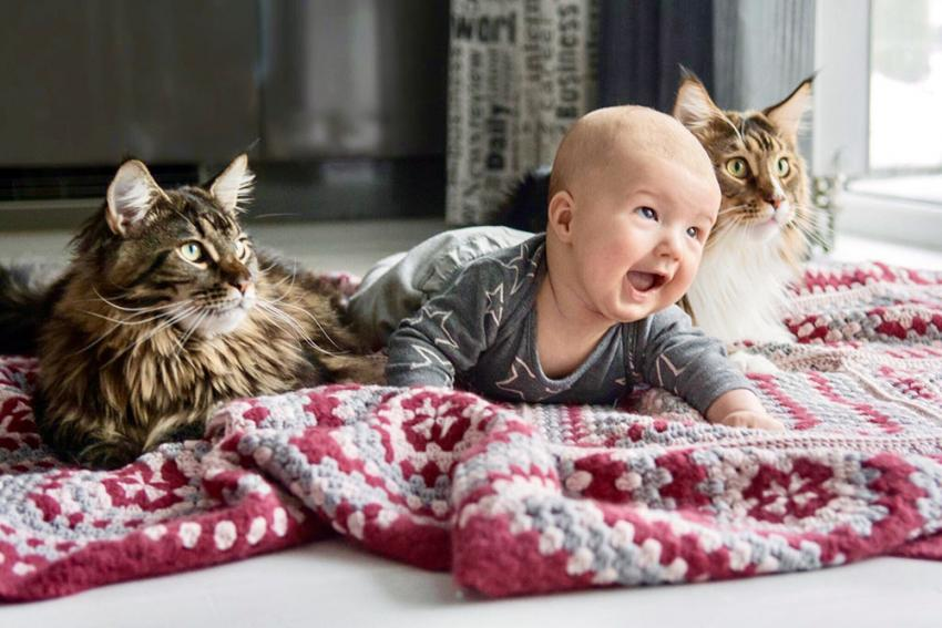 Cat with baby boy on a rug