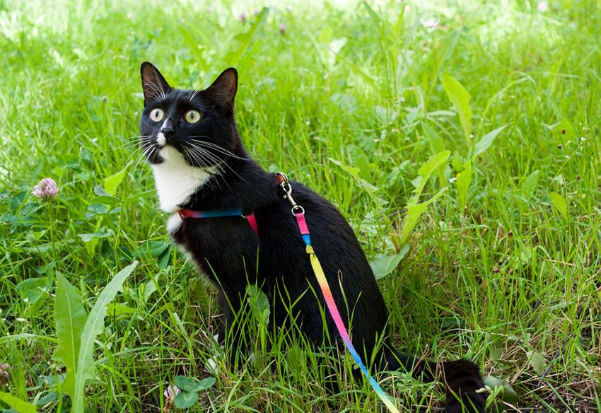 Black and white cat walking in the tall grass