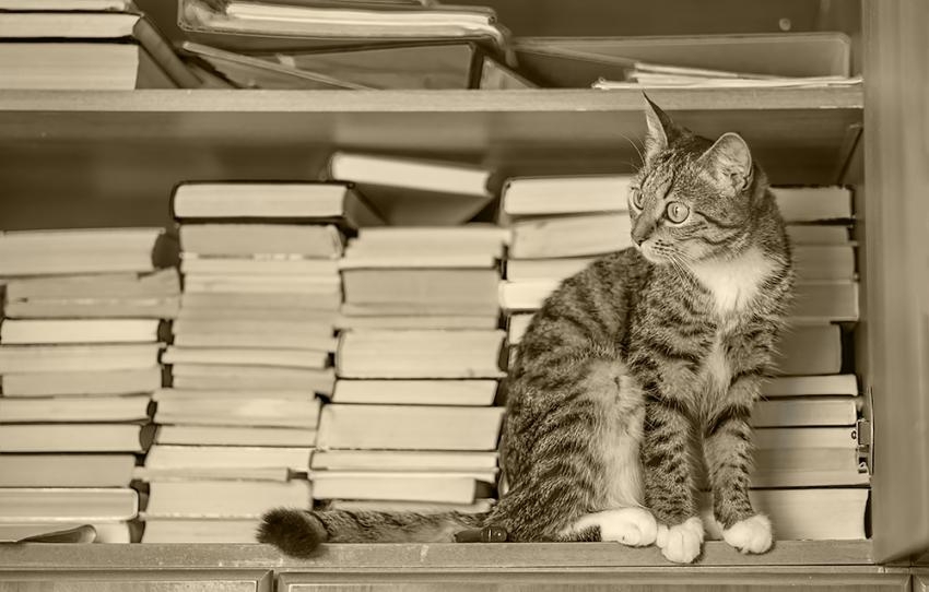 Cat in front of book stack