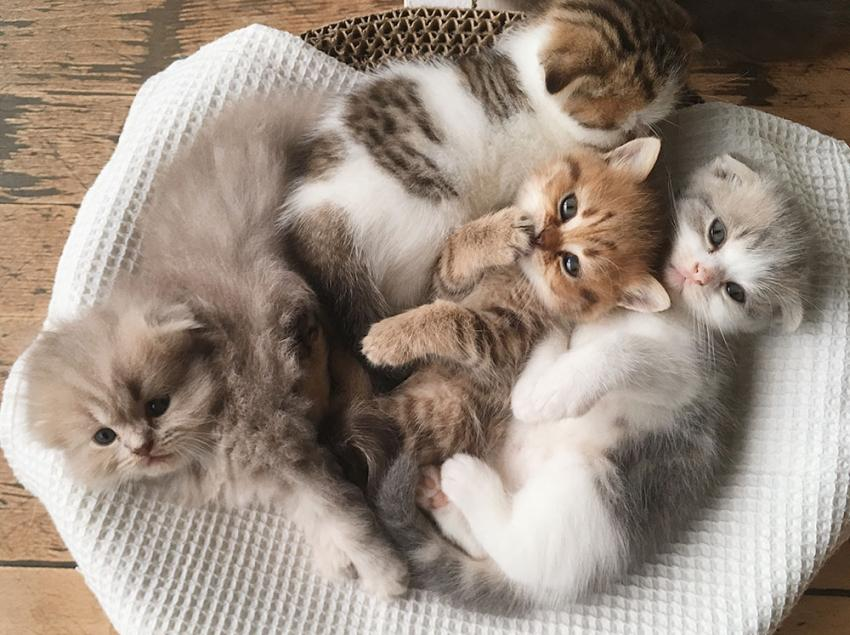 Cat in a bed full of kittens