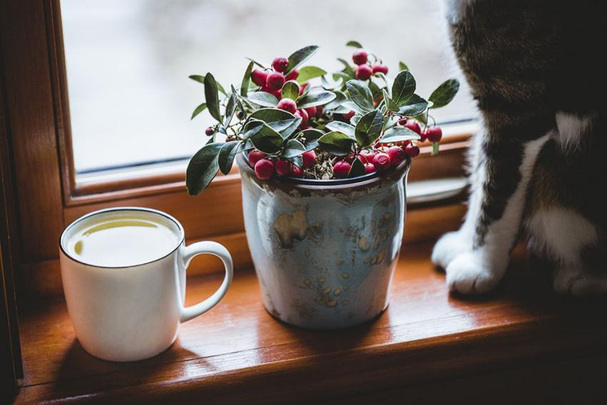 Holly plant with cat next to it