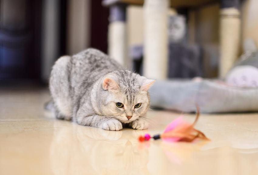 Toys can help reduce pet obesity
