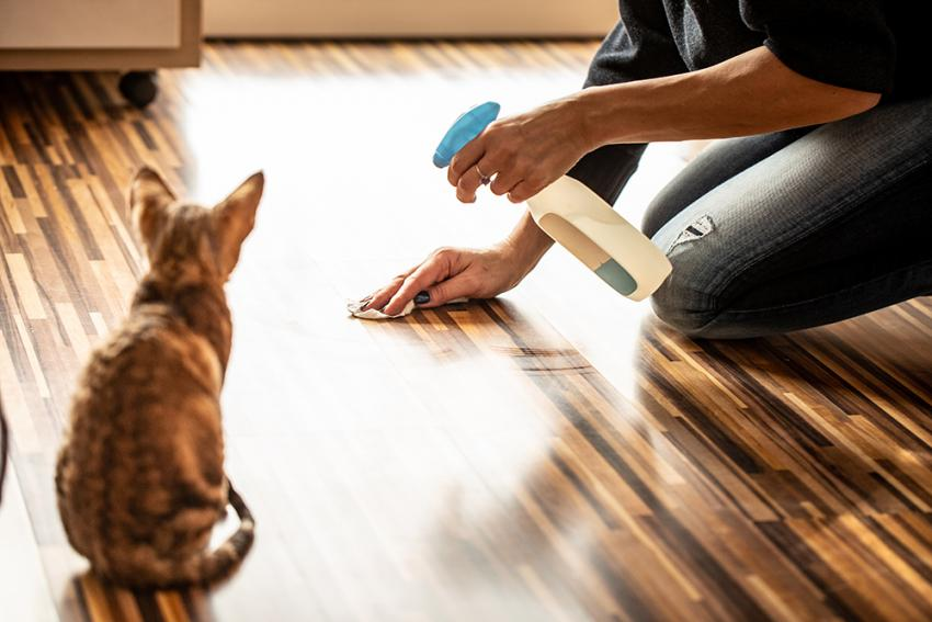 Cleaning after a cat