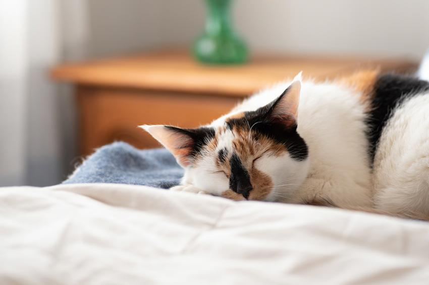 Cute calico cat napping in sunlight
