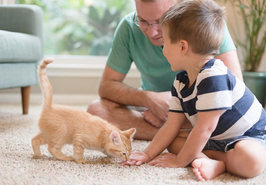 Father and child playing with orange kitten on the floor
