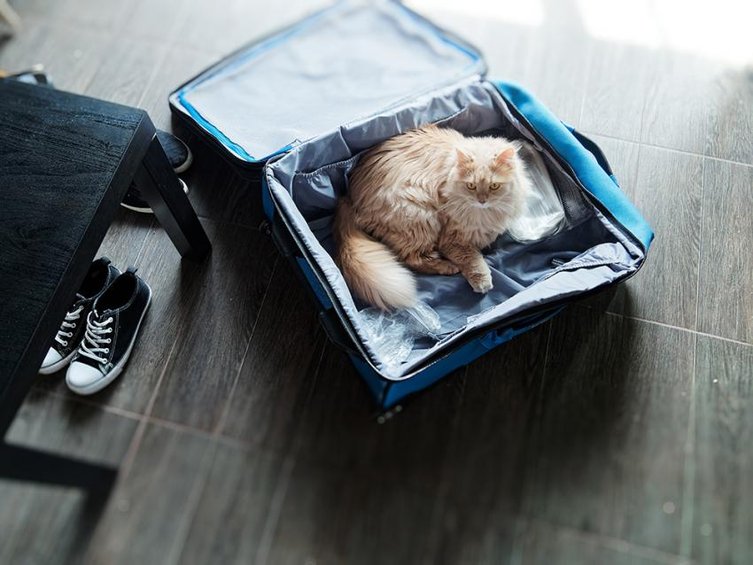 Cat in a fluffy blue suitcase
