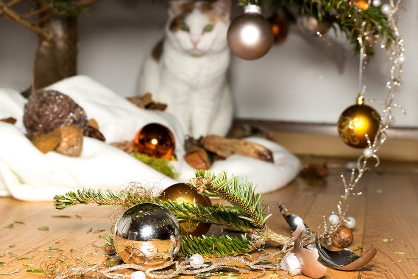 Cat knocking down ornaments on a holiday tree