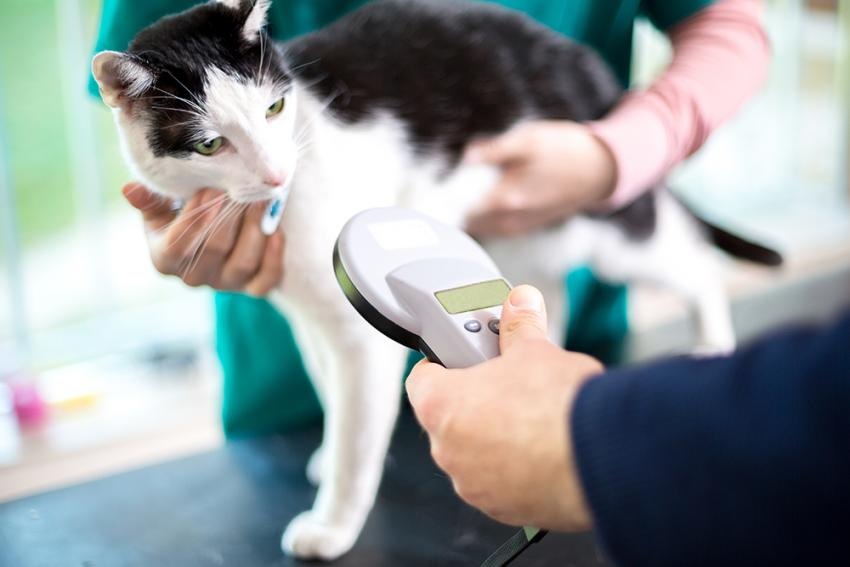 Cat being scanned with microchip