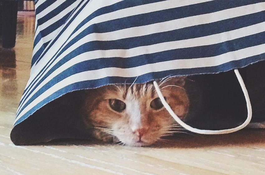 Orange tabby peeking out of a shopping bag