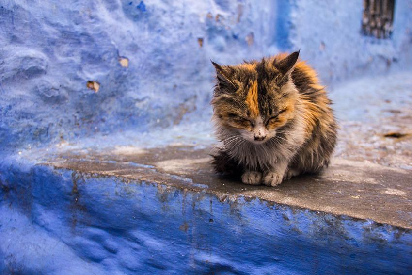 Test Cats for FIV and FeLV: Stray cat sitting on wall outside