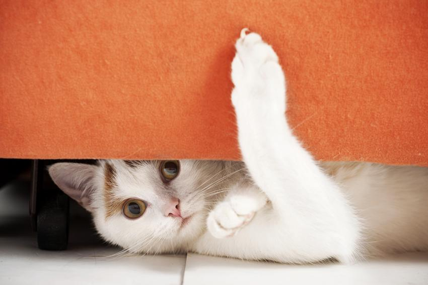Three Alternatives For Declawing Your Cat Figo Pet Insurance