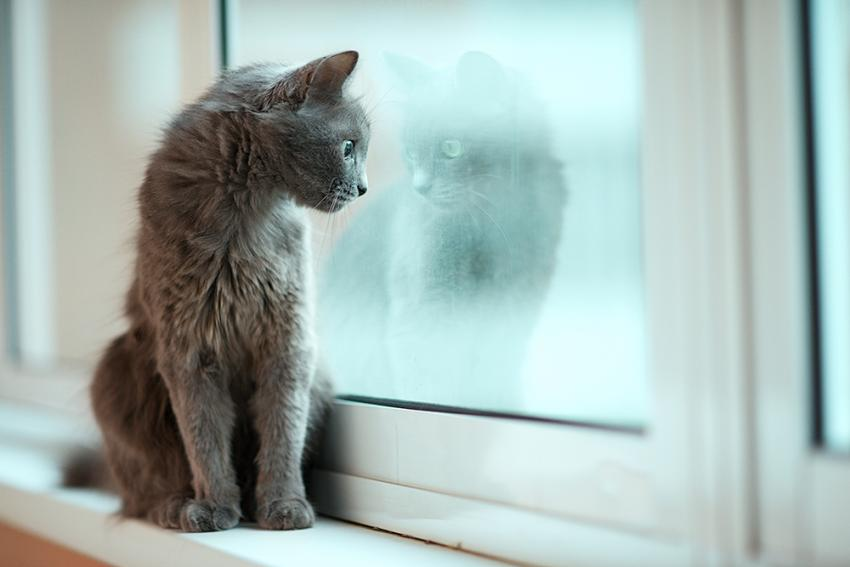 Cat staring at reflection in window during winter