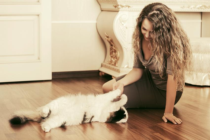 Tips For Finding Cat Friendly Hotels And Lodging | Figo Pet Insurance