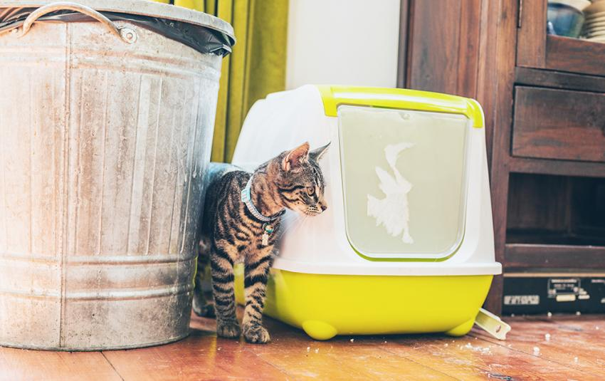Cat urinary health and litter box use