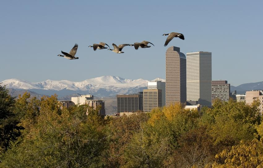 Pet friendly places in Denver, Colorado