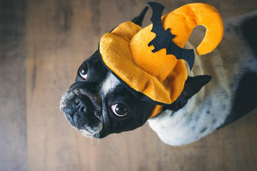 DIY Halloween for pets and their people