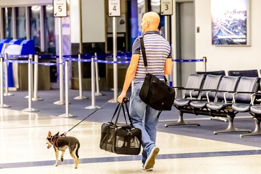 Man walking dog through airport