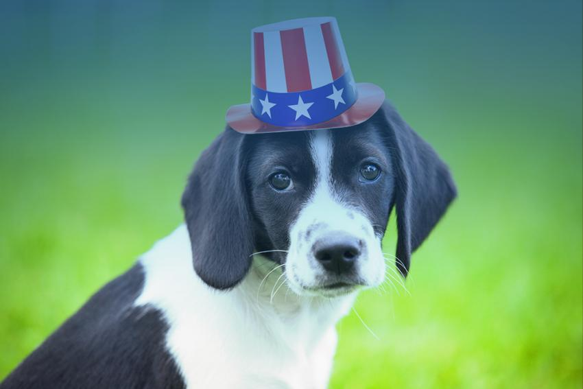 Patriotic pooch: presidential candidates and their doggy doppelgangers