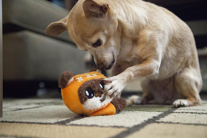 Dog and her Ewok chew toy
