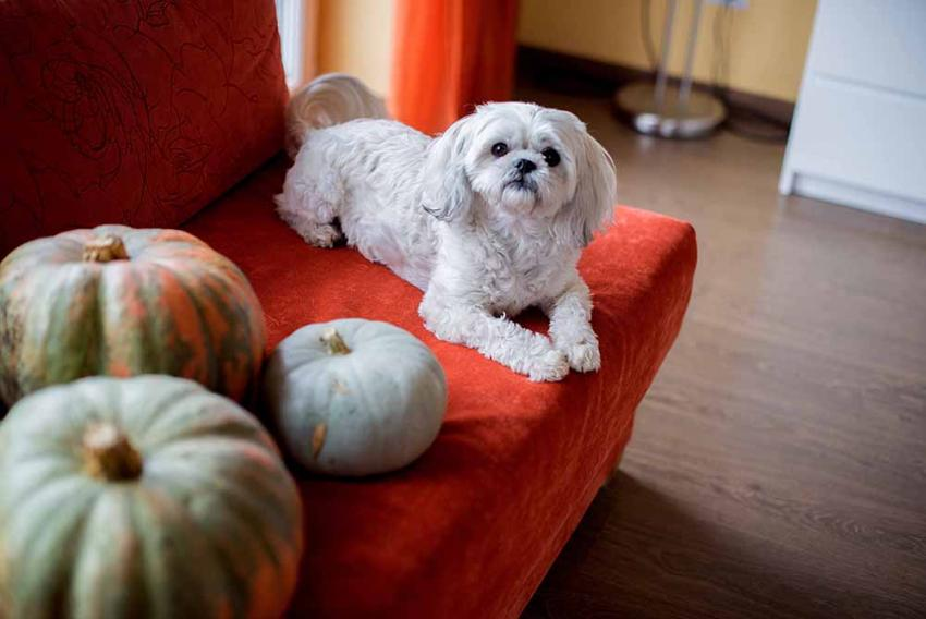 Puppy on a red couch