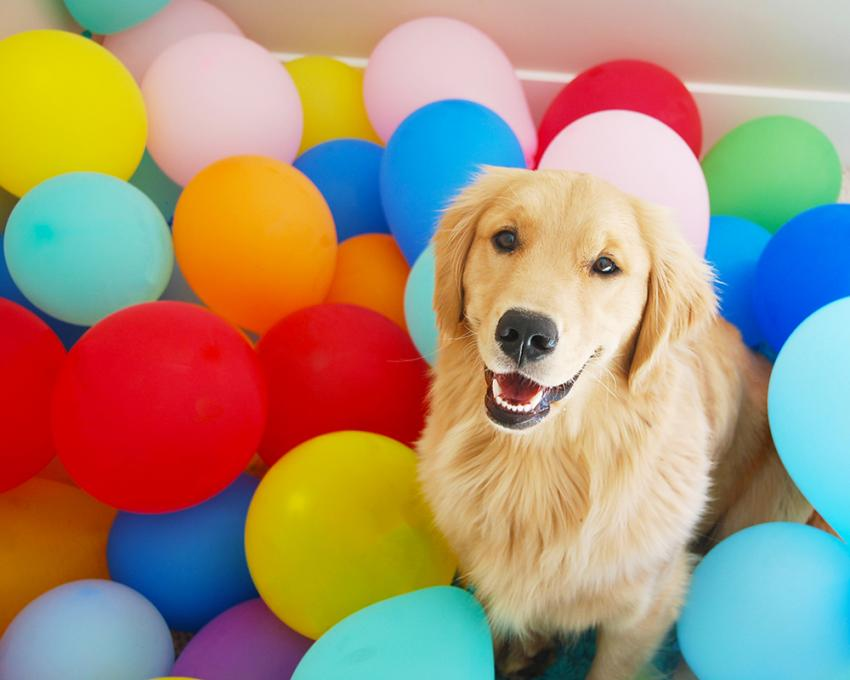 Party animals: pets celebrating the good life | @mattspataro via Twenty20