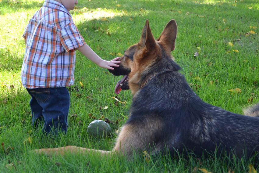 Boy with German Shepherd on lawn
