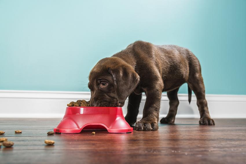 Veterinarian Tips For Choosing Dog Food | Figo Pet Insurance