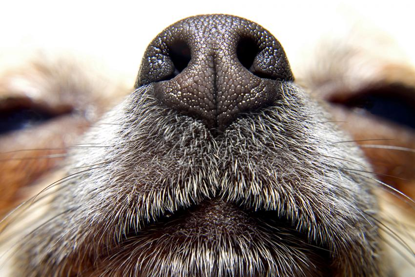 Small dog's nose