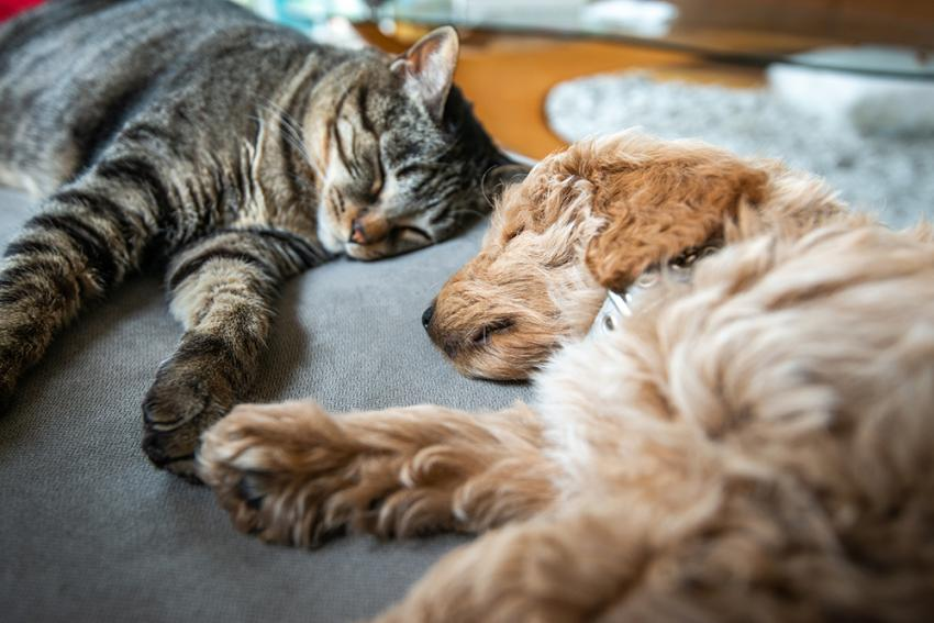 Cat and dog and laying down