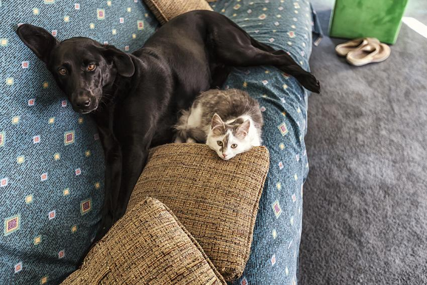 cats and dogs laying on a couch together