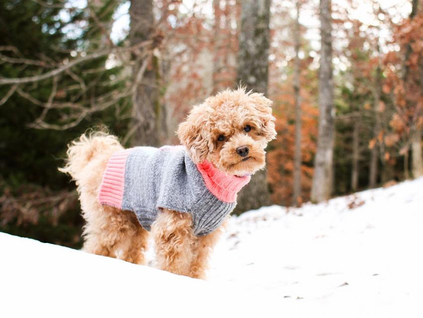 cute dog wearing sweater in the snow