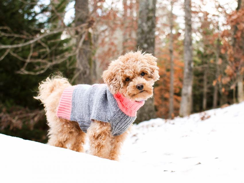 Stay Warm With These Cool Winter Pet Gear Recommendations | Figo Pet Insurance