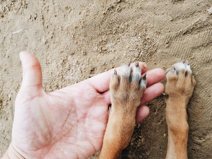Human with dog paws