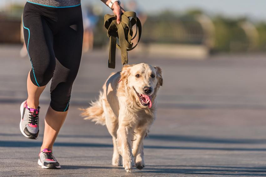 Dog running with a woman
