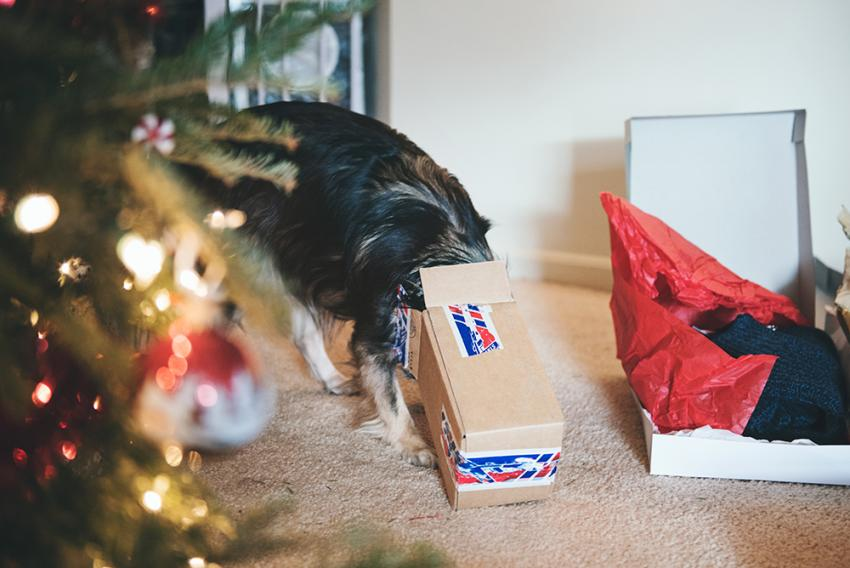 Look Outside The Box For The Perfect Pet Present | Figo Pet Insurance
