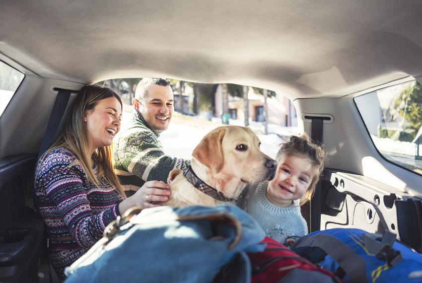 Family road trip with dog in the back seat