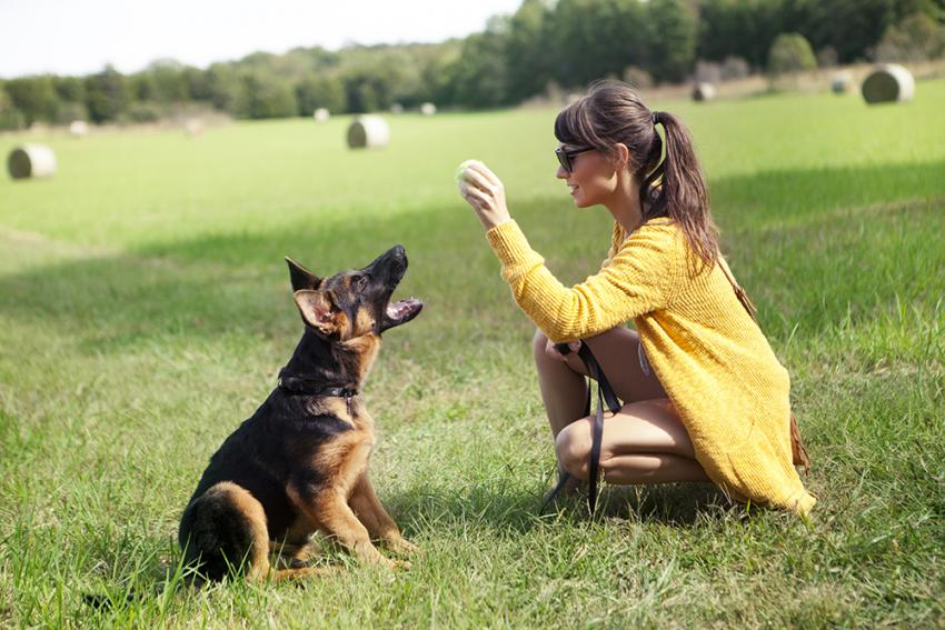 Tips for training your German Shepherd