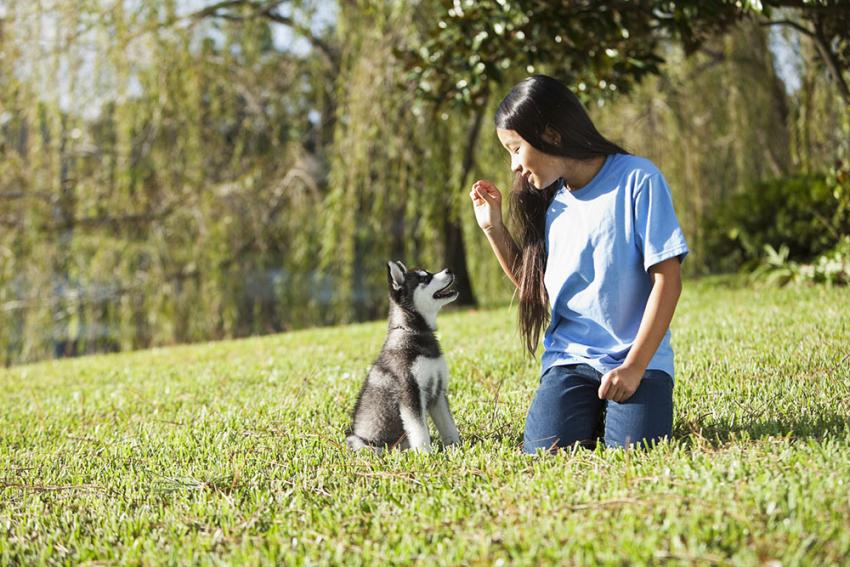 Girl sits with her husky puppy in the grass outside