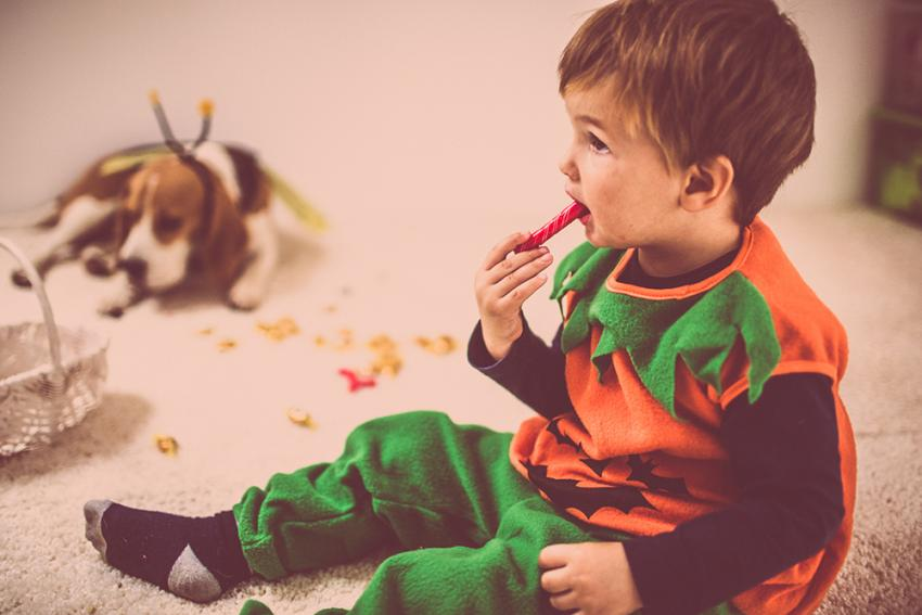 Pets and Halloween candy safety: child eating holiday candy with dog nearby