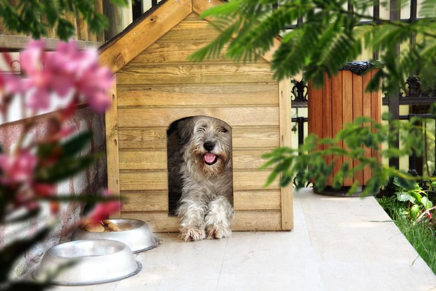 Dog house with dog in it